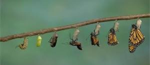 metamorfosis-mariposas